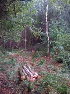 Forestry stuff (Woodland management)