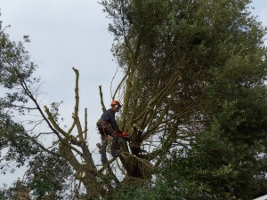 Holm Dave (home page tree services)