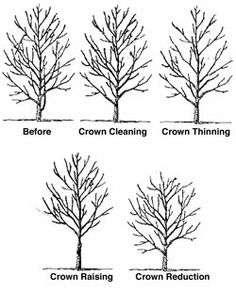 tree_chart